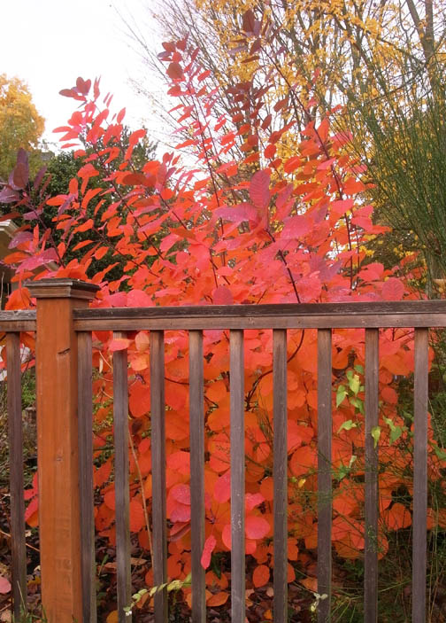fall color | Erin Lau Design | Seattle Landscape and Garden Design ...